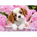 Puzzel Puppy met roze bloemen Castorland B-52233